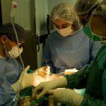 böyrək transplantasiyası